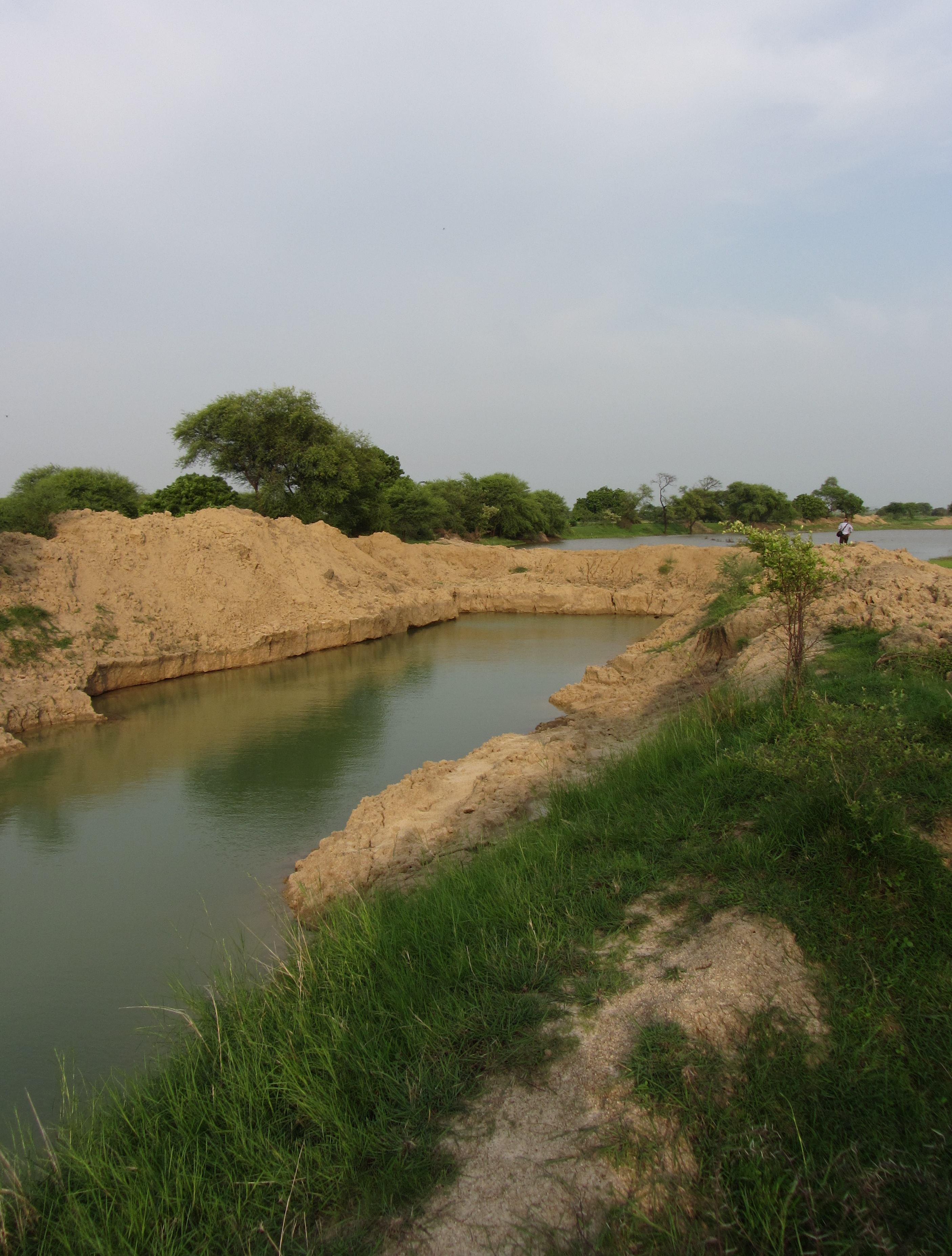 A farm pond in Mahoba district